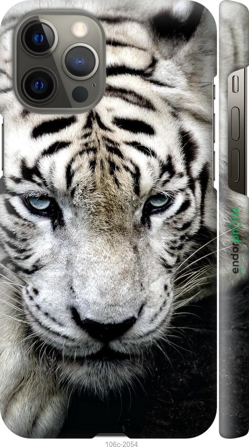 Грустный белый тигр