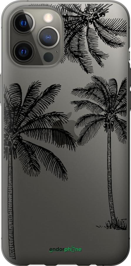 Пальмы1