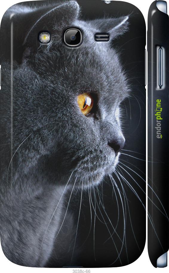 Красивый кот